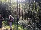 Forêt des Colette - Oct. 2017 _10