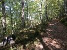 Forêt des Colette - Oct. 2017 _12