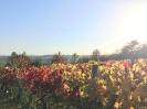 Forêt des Colette - Oct. 2017 _19