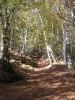 Forêt des Colette - Oct. 2017 _4