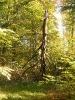 Forêt des Colette - Oct. 2017 _5