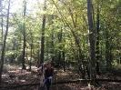 Forêt des Colette - Oct. 2017 _6