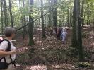 Forêt des Colette - Oct. 2017 _7