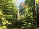 Forêt des Colette - Oct. 2017 _8